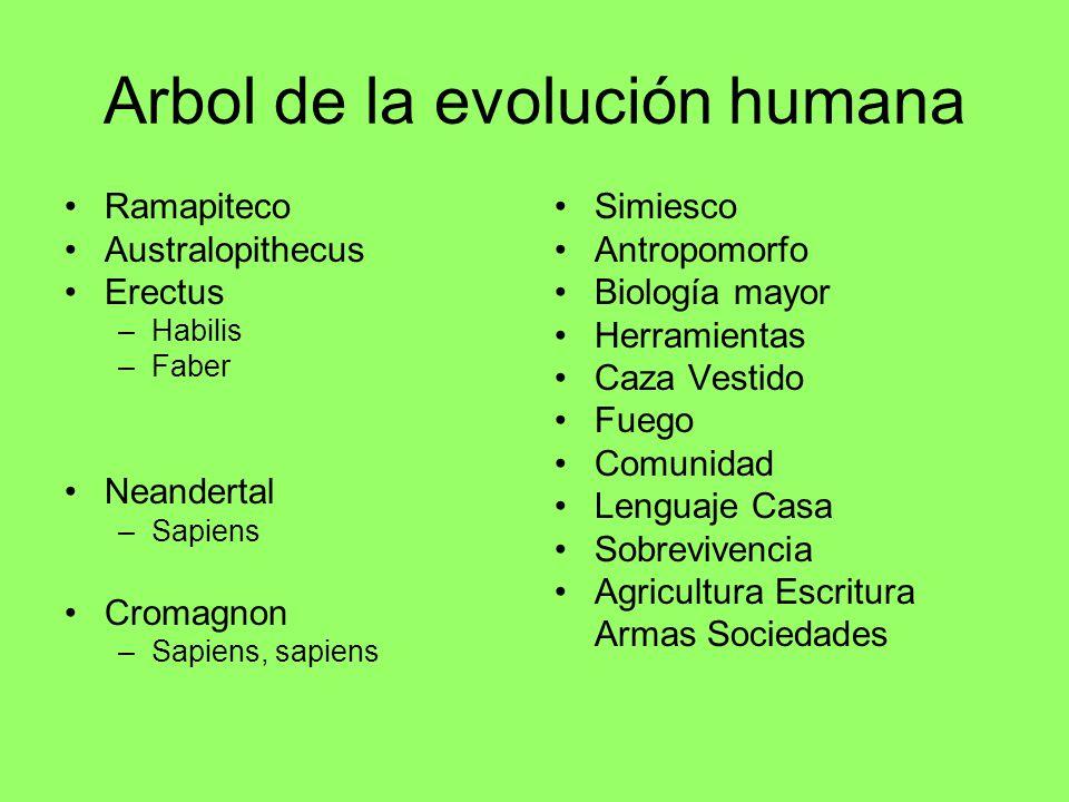 Arbol de la evolución humana