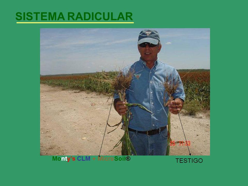 SISTEMA RADICULAR Monty's CLM + MicroSoil® TESTIGO