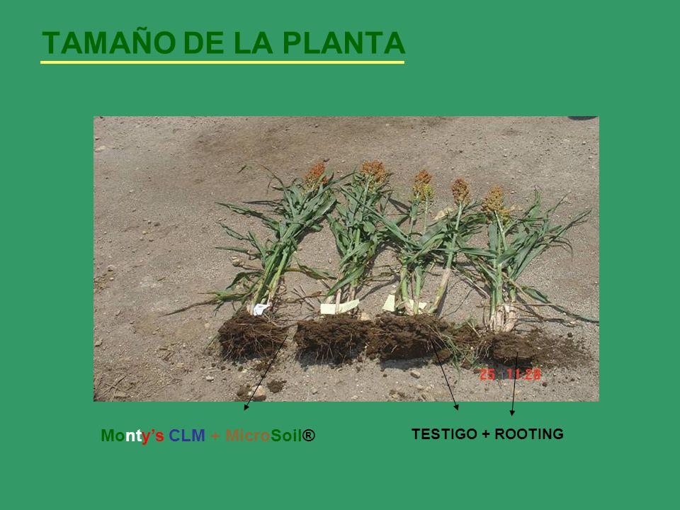TAMAÑO DE LA PLANTA Monty's CLM + MicroSoil® TESTIGO + ROOTING