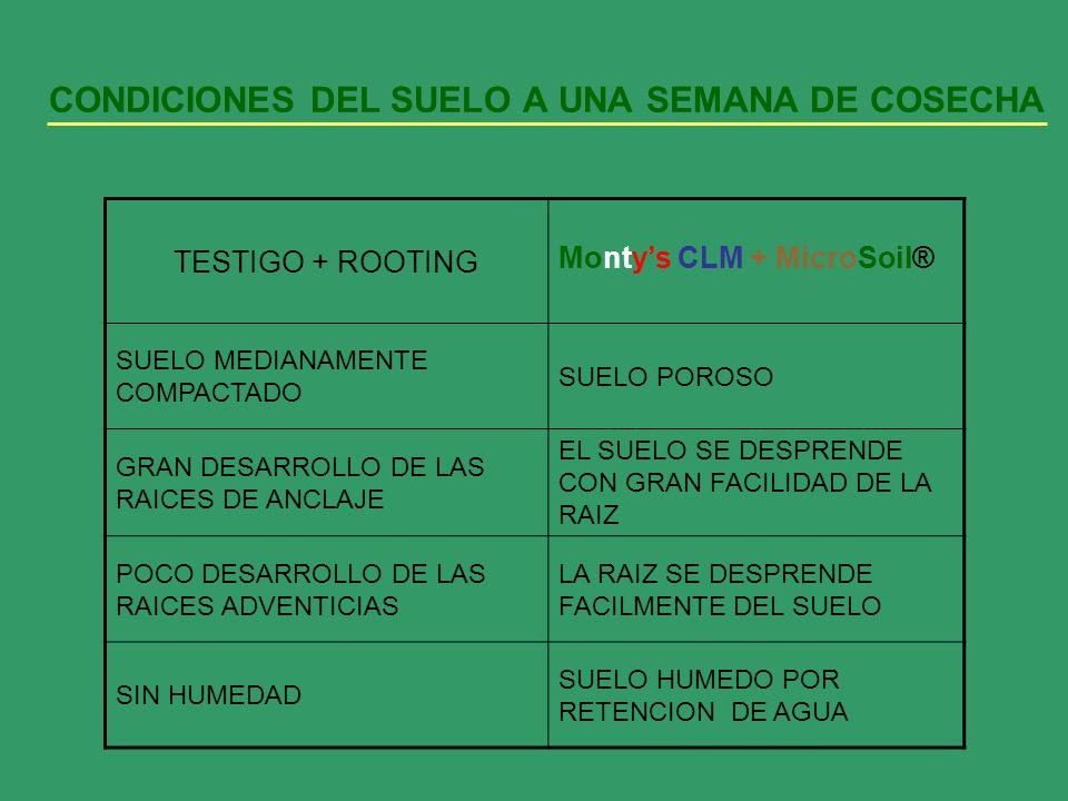 CONDICIONES DEL SUELO A UNA SEMANA DE COSECHA