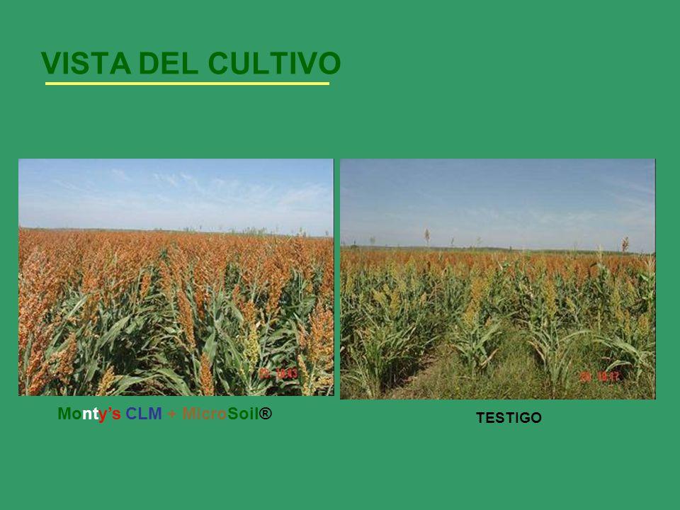 VISTA DEL CULTIVO Monty's CLM + MicroSoil® TESTIGO