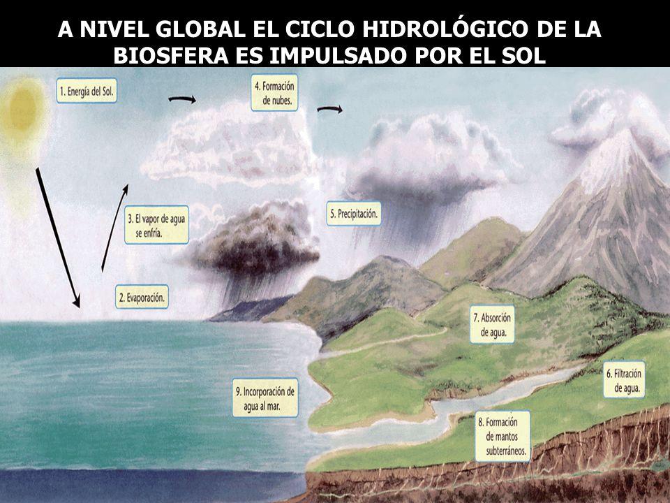 A NIVEL GLOBAL EL CICLO HIDROLÓGICO DE LA BIOSFERA ES IMPULSADO POR EL SOL