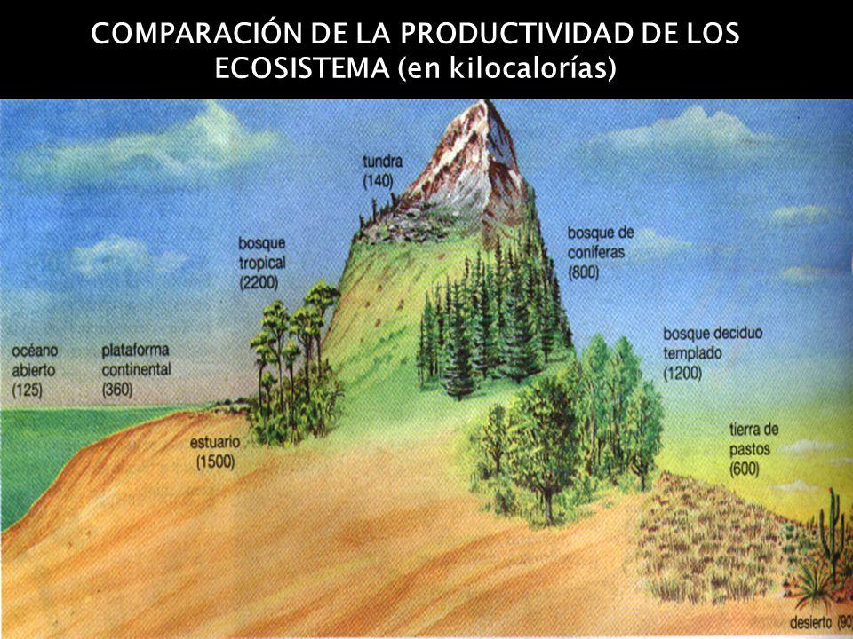 COMPARACIÓN DE LA PRODUCTIVIDAD DE LOS ECOSISTEMA (en kilocalorías)