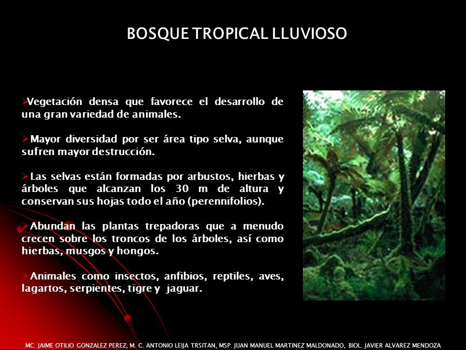 BOSQUE TROPICAL LLUVIOSO