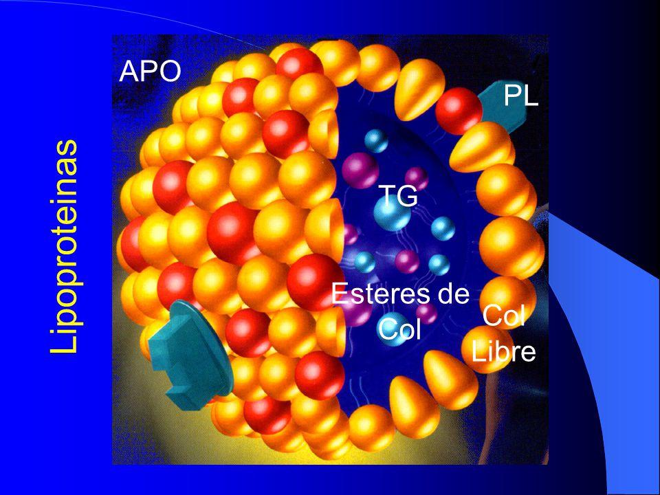 APO PL TG Lipoproteinas Esteres de Col Col Libre