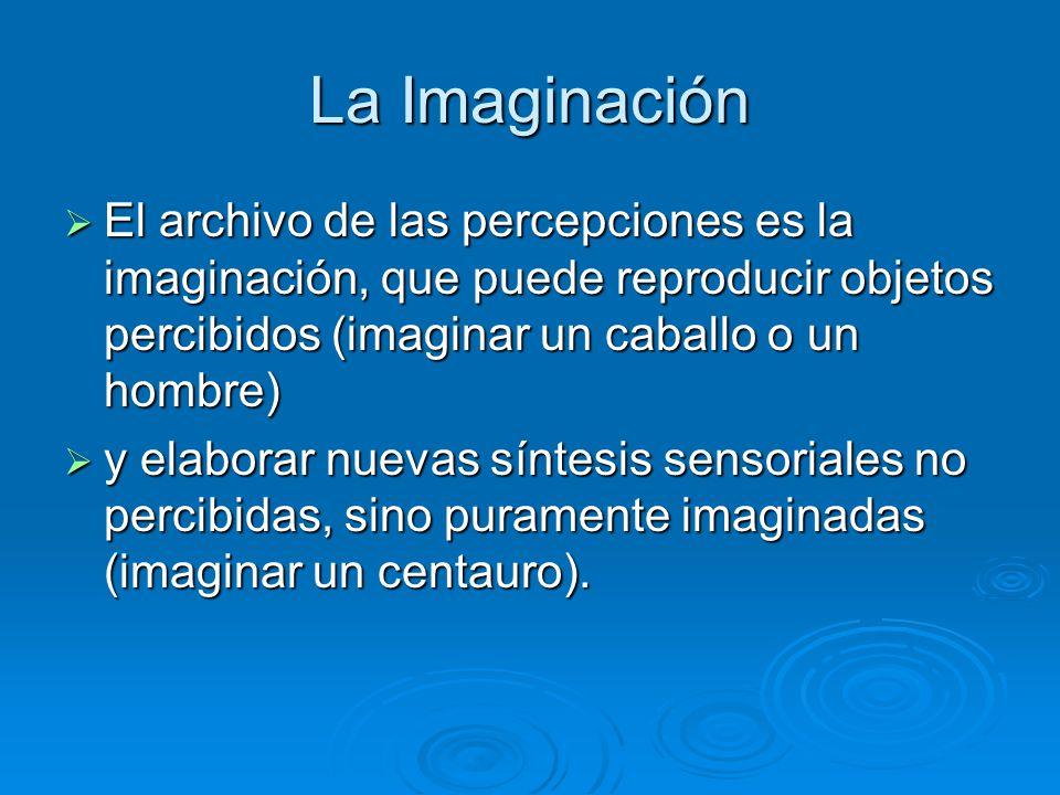 La Imaginación El archivo de las percepciones es la imaginación, que puede reproducir objetos percibidos (imaginar un caballo o un hombre)