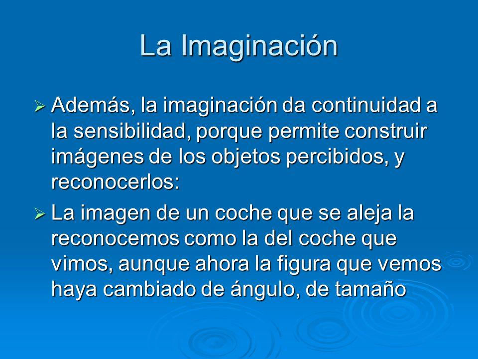 La Imaginación Además, la imaginación da continuidad a la sensibilidad, porque permite construir imágenes de los objetos percibidos, y reconocerlos: