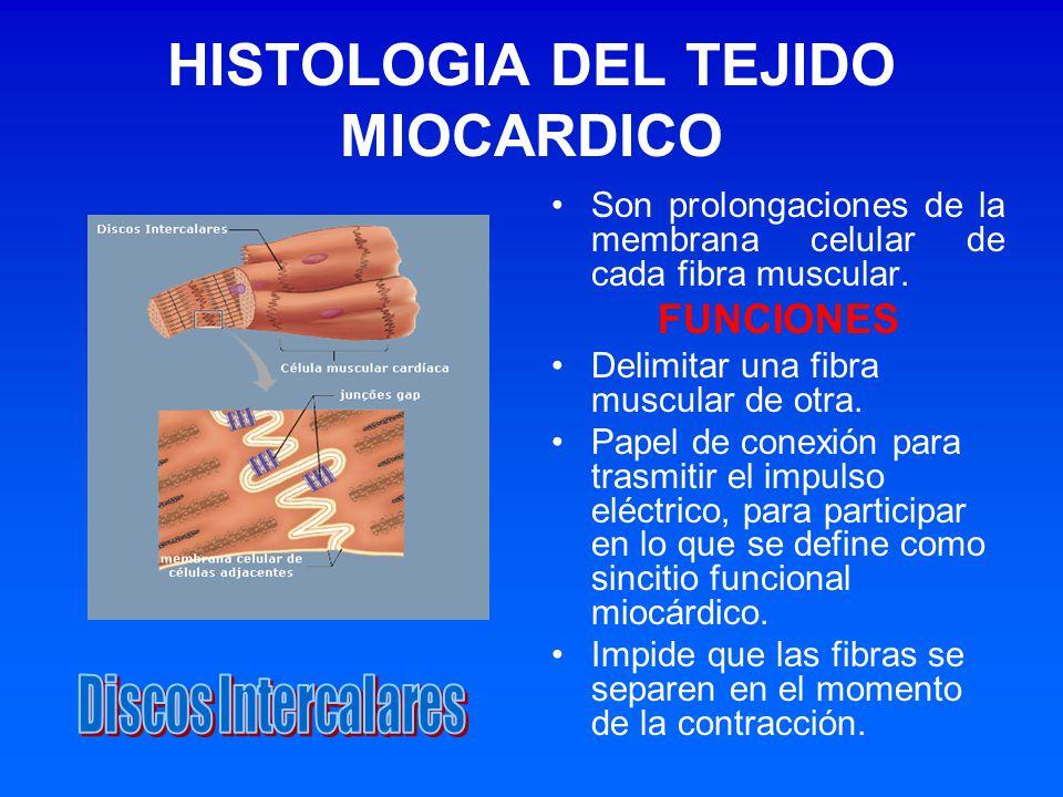 HISTOLOGIA DEL TEJIDO MIOCARDICO