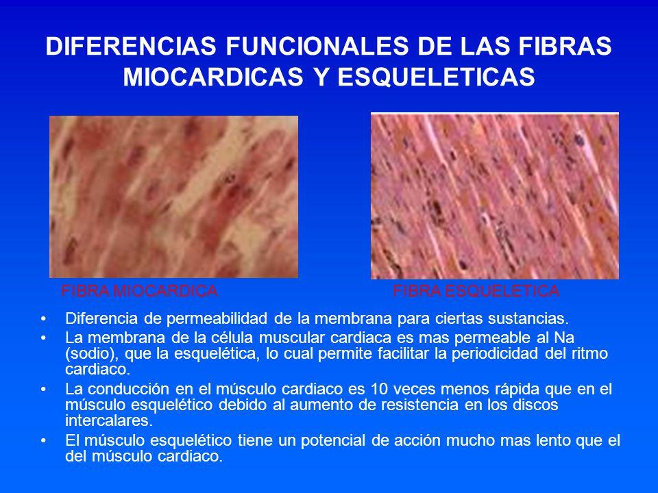 DIFERENCIAS FUNCIONALES DE LAS FIBRAS MIOCARDICAS Y ESQUELETICAS