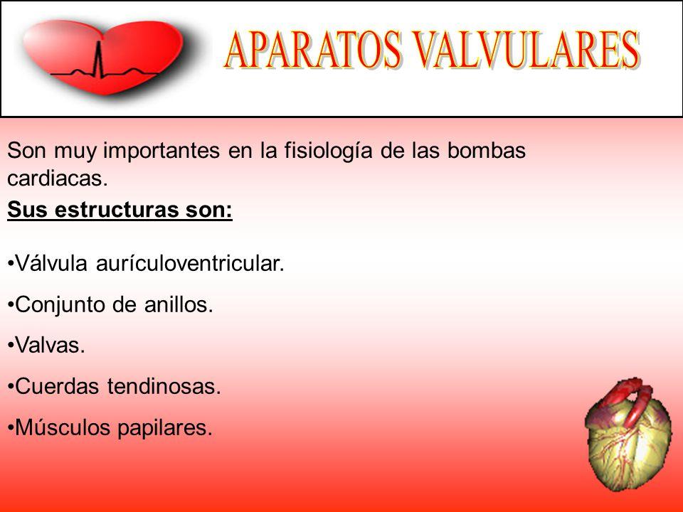 APARATOS VALVULARES Son muy importantes en la fisiología de las bombas cardiacas. Sus estructuras son: