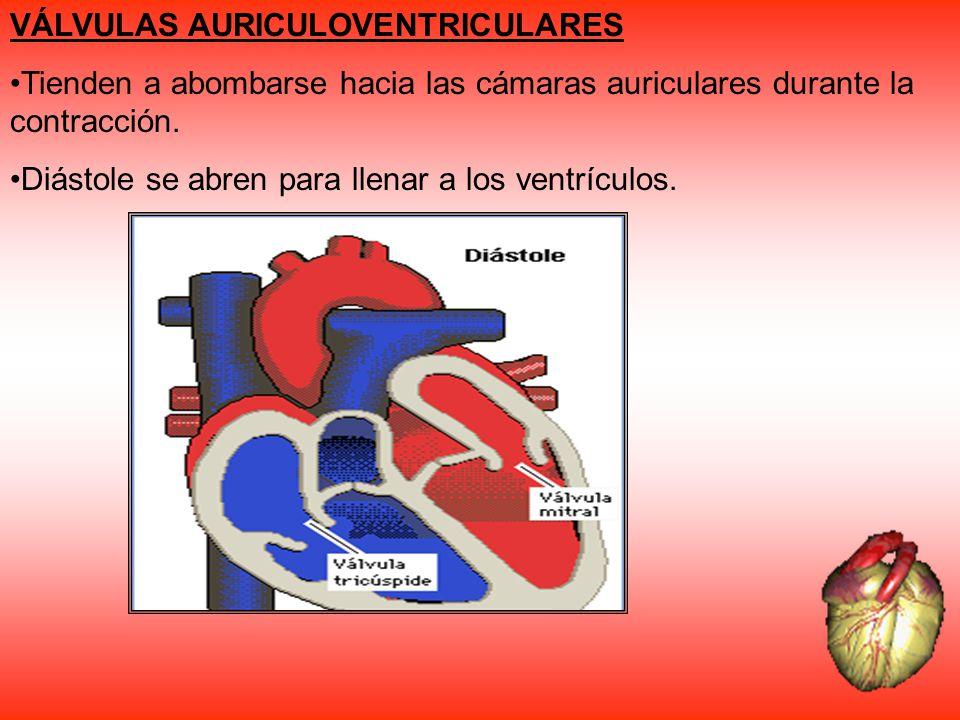 VÁLVULAS AURICULOVENTRICULARES
