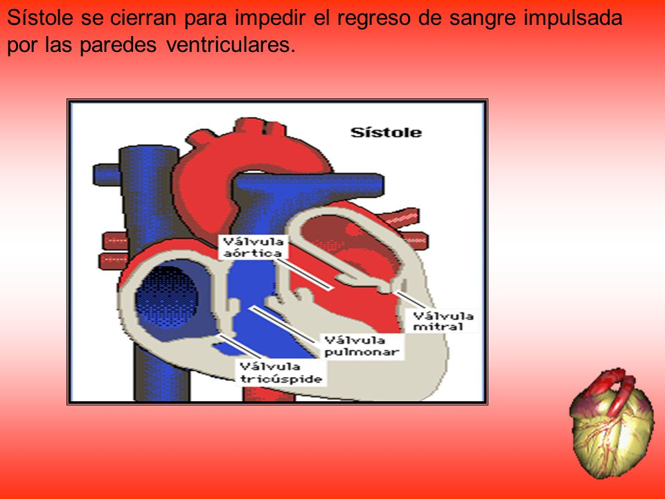 Sístole se cierran para impedir el regreso de sangre impulsada por las paredes ventriculares.