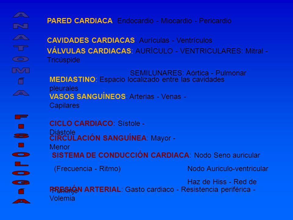 PARED CARDIACA: Endocardio - Miocardio - Pericardio