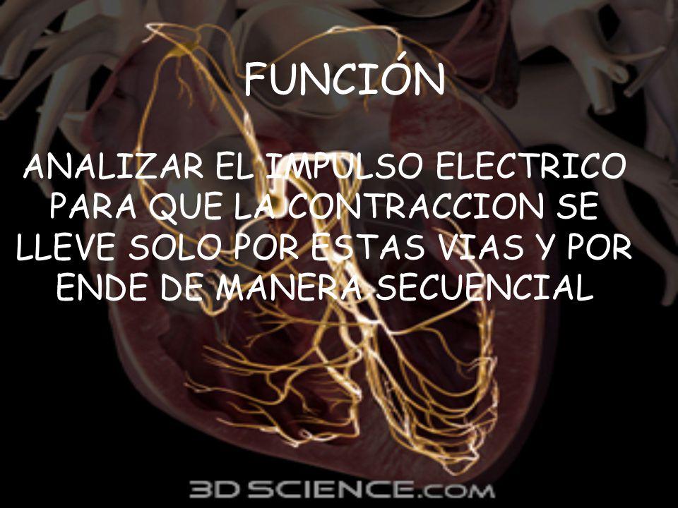 FUNCIÓN ANALIZAR EL IMPULSO ELECTRICO PARA QUE LA CONTRACCION SE LLEVE SOLO POR ESTAS VIAS Y POR ENDE DE MANERA SECUENCIAL.