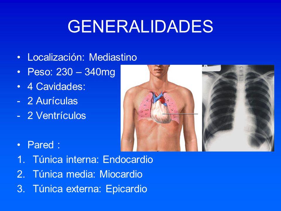 GENERALIDADES Localización: Mediastino Peso: 230 – 340mg 4 Cavidades: