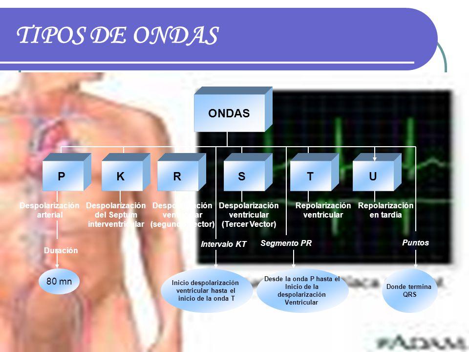 TIPOS DE ONDAS ONDAS P K R S T U 80 mn Despolarización arterial