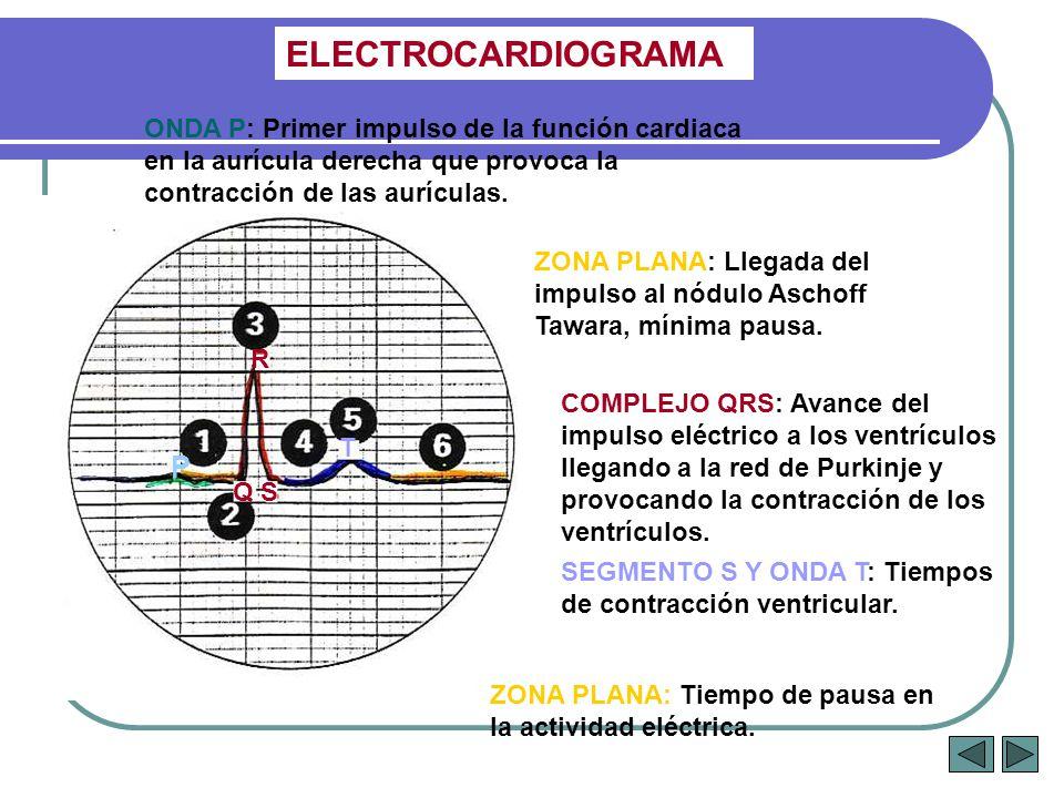 ELECTROCARDIOGRAMA ONDA P: Primer impulso de la función cardiaca en la aurícula derecha que provoca la contracción de las aurículas.