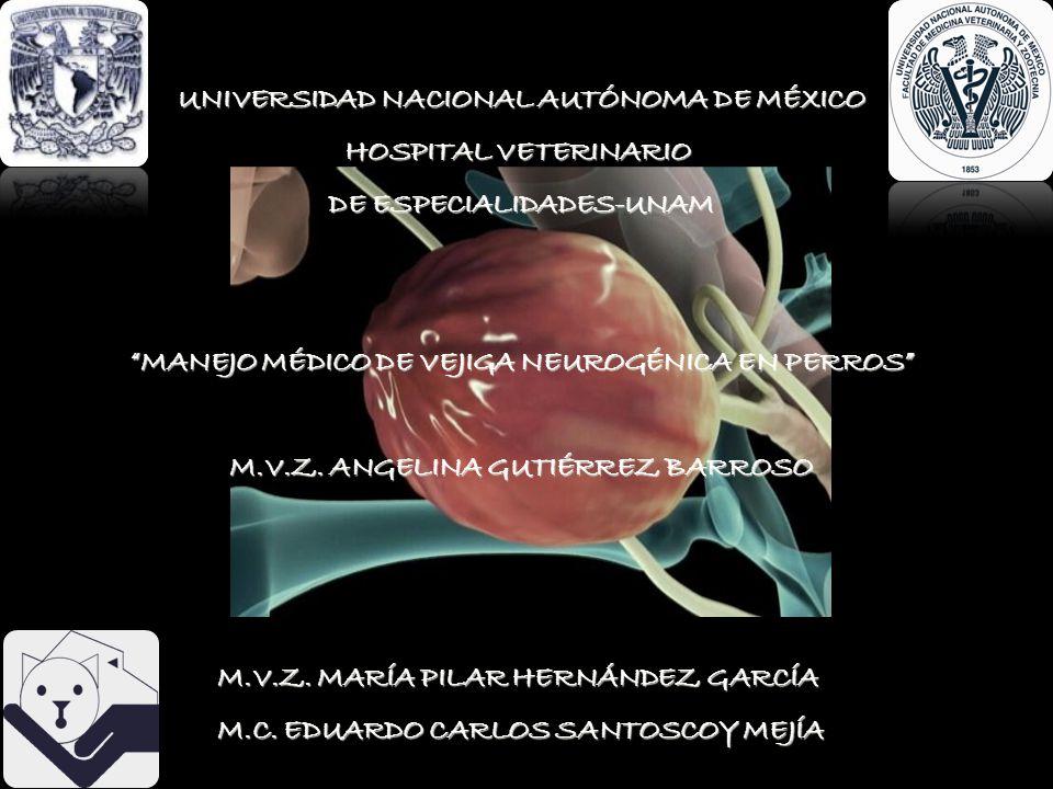 UNIVERSIDAD NACIONAL AUTÓNOMA DE MÉXICO HOSPITAL VETERINARIO