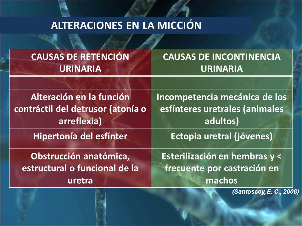 ALTERACIONES EN LA MICCIÓN