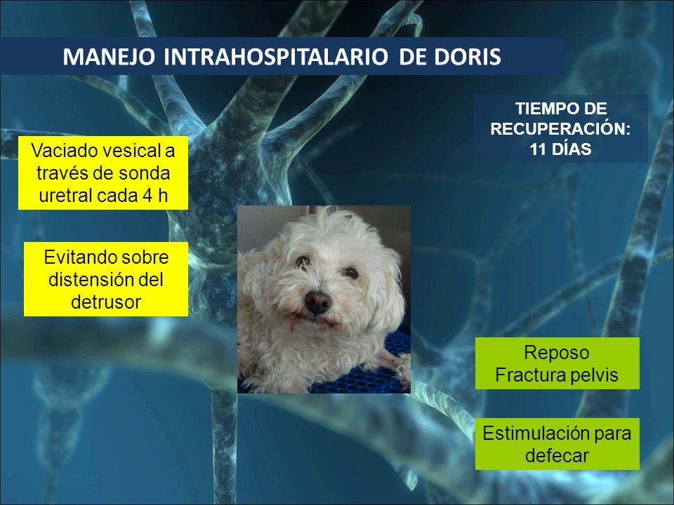 MANEJO INTRAHOSPITALARIO DE DORIS TIEMPO DE RECUPERACIÓN: