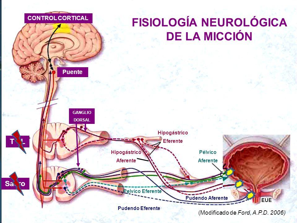 FISIOLOGÍA NEUROLÓGICA DE LA MICCIÓN
