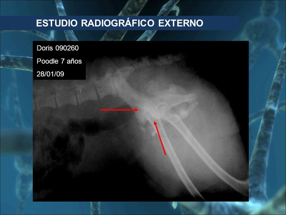 ESTUDIO RADIOGRÁFICO EXTERNO
