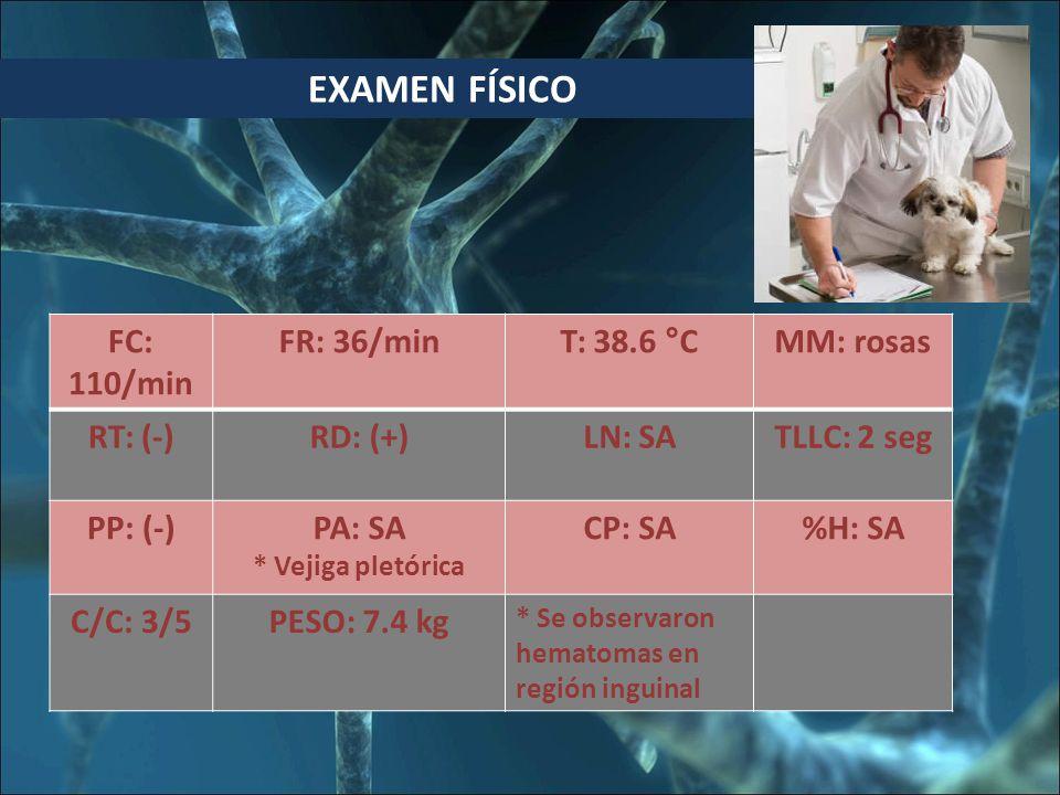 EXAMEN FÍSICO FC: 110/min FR: 36/min T: 38.6 °C MM: rosas RT: (-)