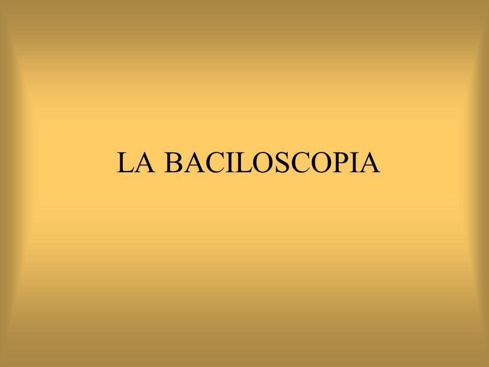 LA BACILOSCOPIA