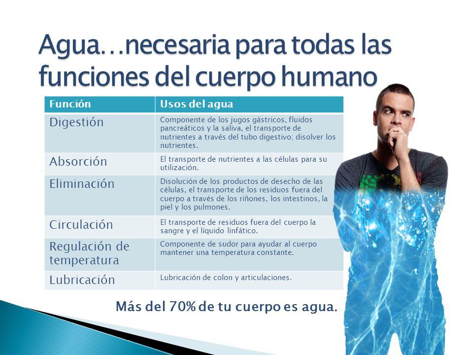 Agua…necesaria para todas las funciones del cuerpo humano