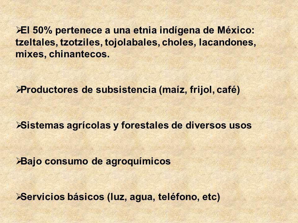 El 50% pertenece a una etnia indígena de México: tzeltales, tzotziles, tojolabales, choles, lacandones, mixes, chinantecos.