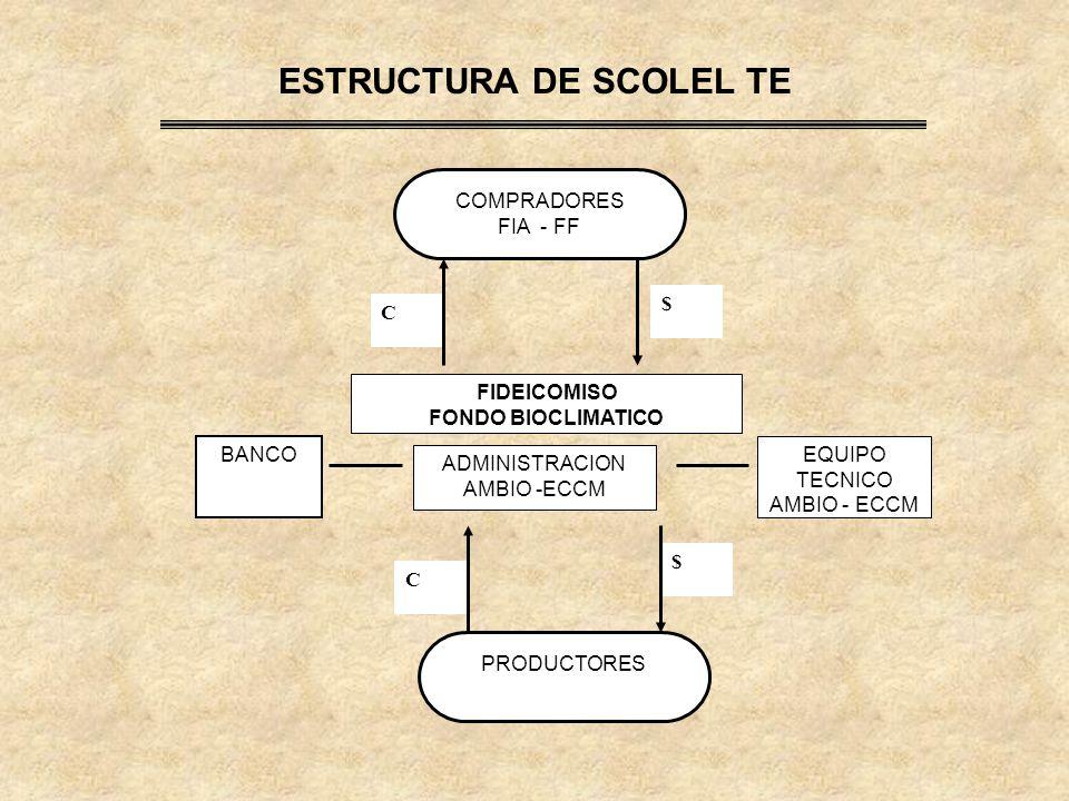 ESTRUCTURA DE SCOLEL TE