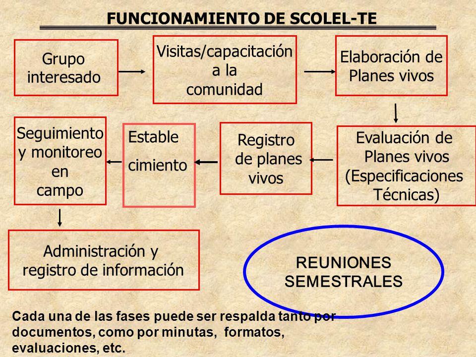 FUNCIONAMIENTO DE SCOLEL-TE