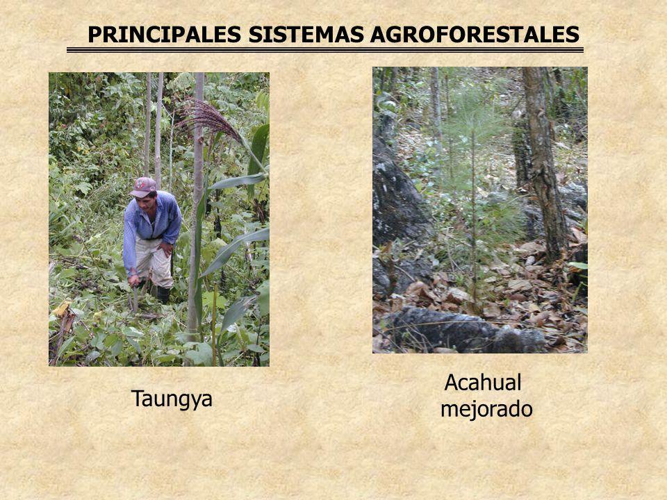 PRINCIPALES SISTEMAS AGROFORESTALES