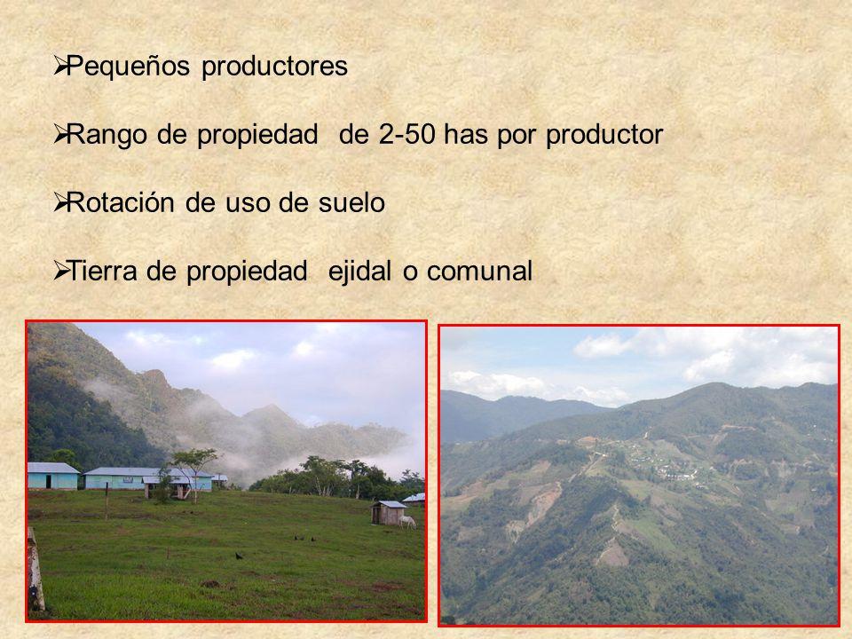 Pequeños productores Rango de propiedad de 2-50 has por productor.