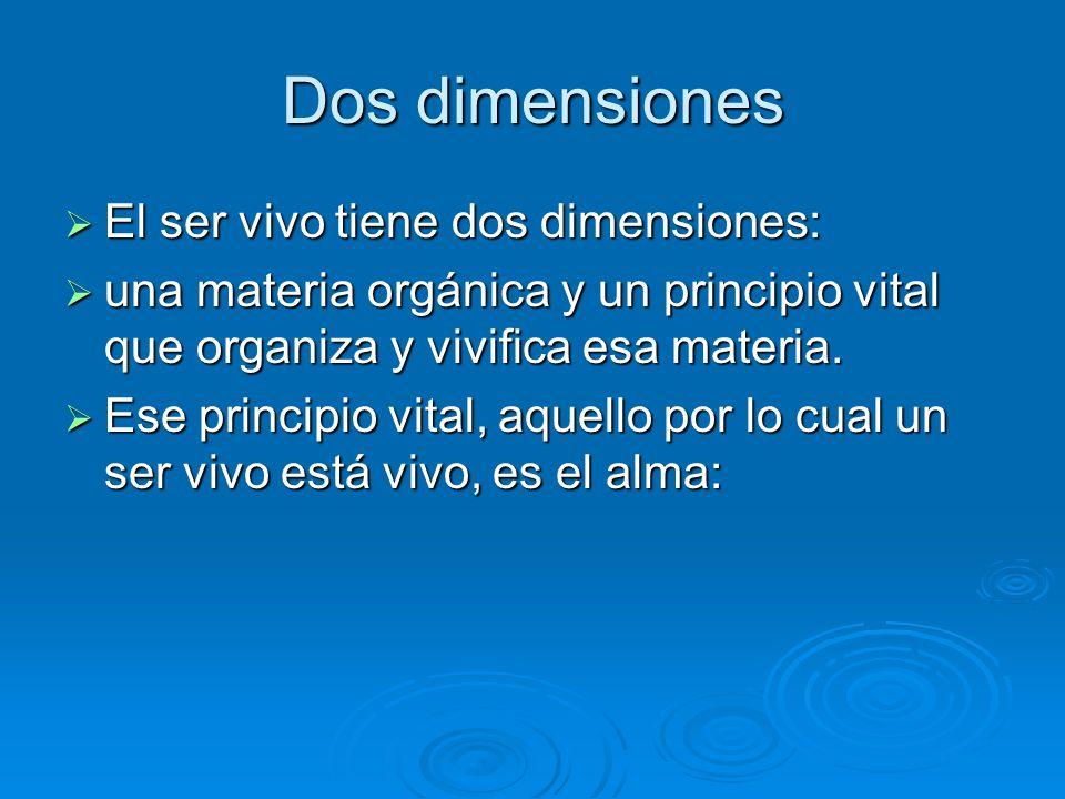 Dos dimensiones El ser vivo tiene dos dimensiones: