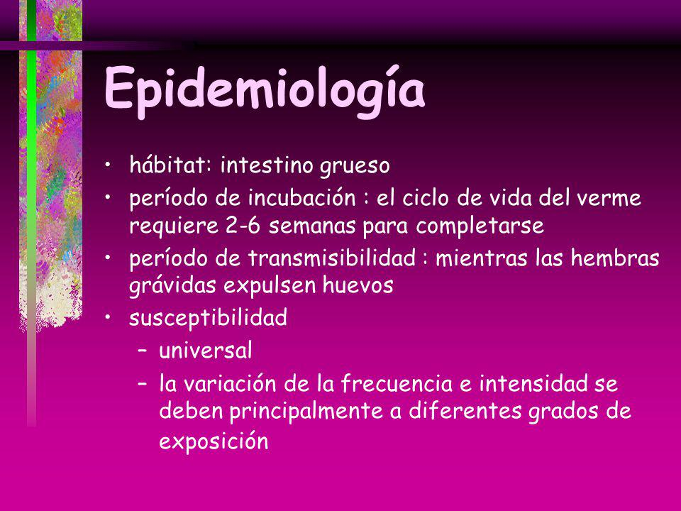 Epidemiología hábitat: intestino grueso