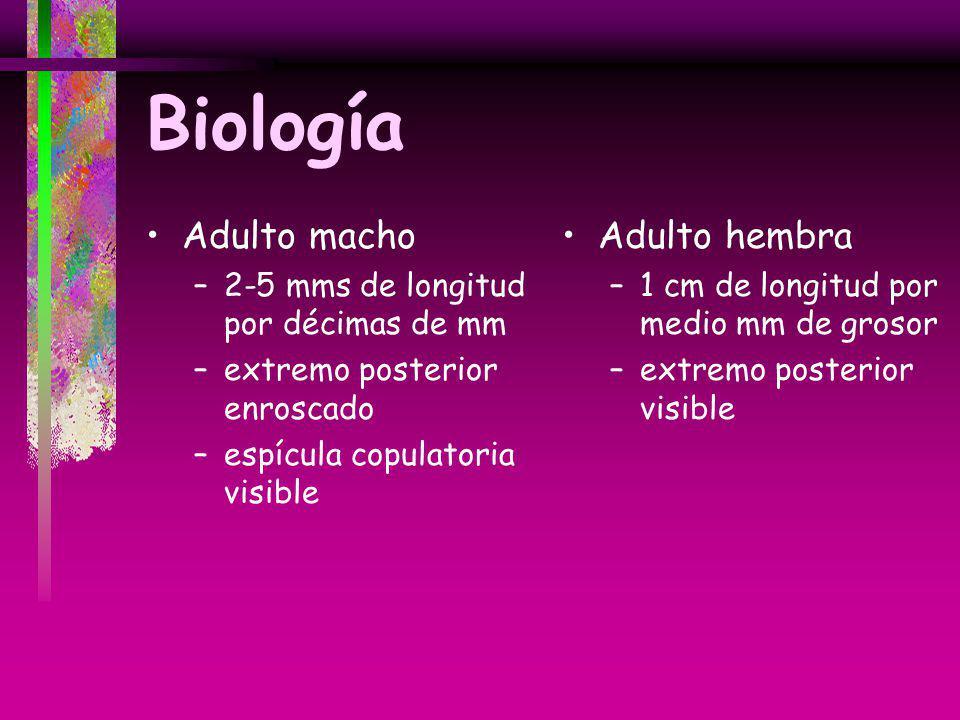 Biología Adulto macho Adulto hembra