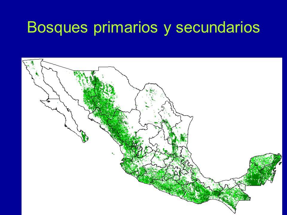 Bosques primarios y secundarios