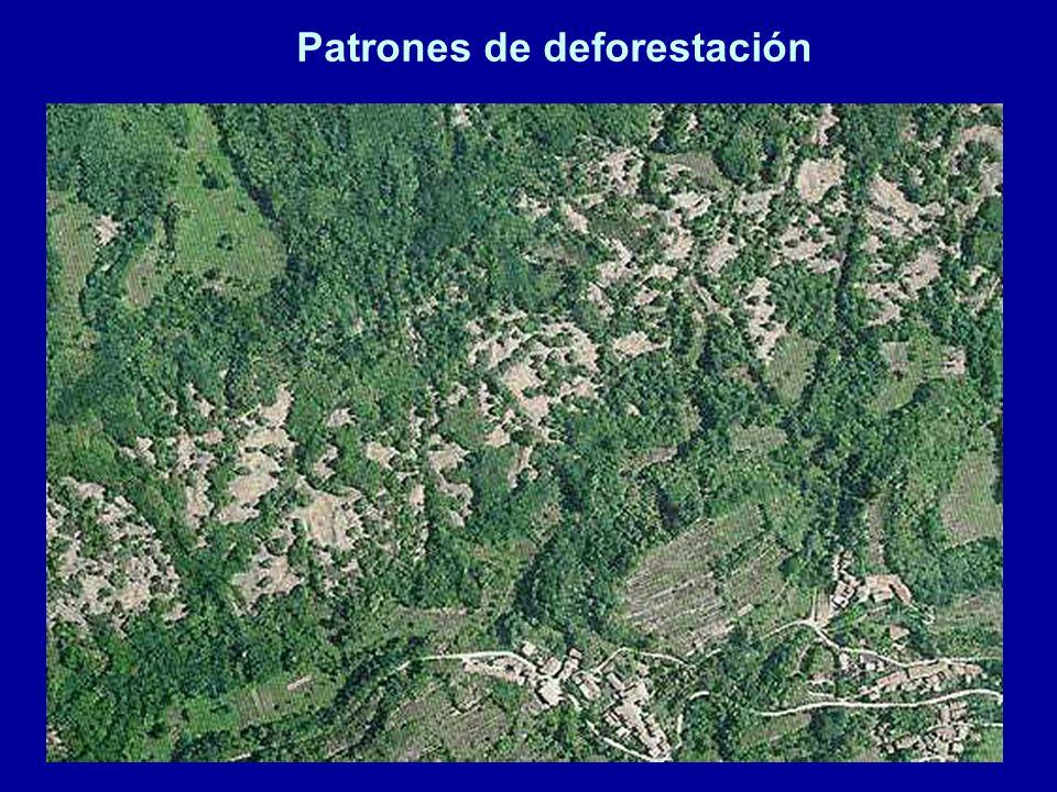 Patrones de deforestación