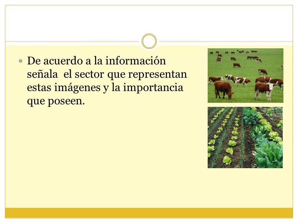 De acuerdo a la información señala el sector que representan estas imágenes y la importancia que poseen.