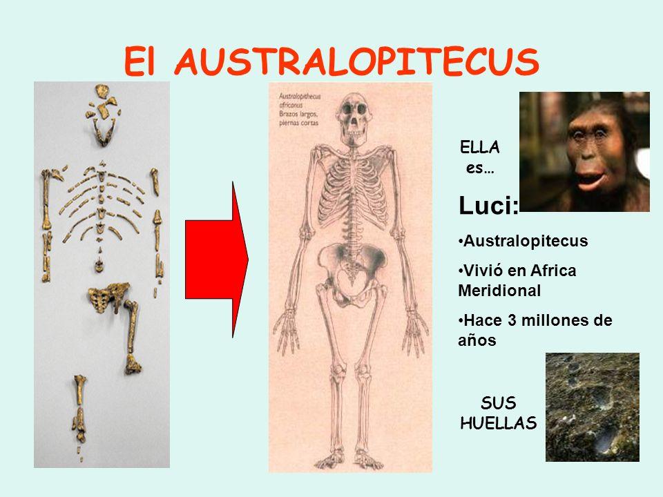 El AUSTRALOPITECUS Luci: ELLA es… Australopitecus