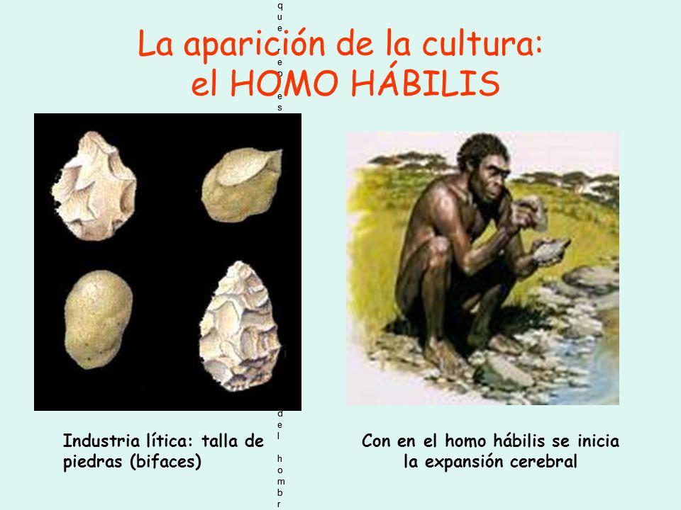 Con en el homo hábilis se inicia la expansión cerebral