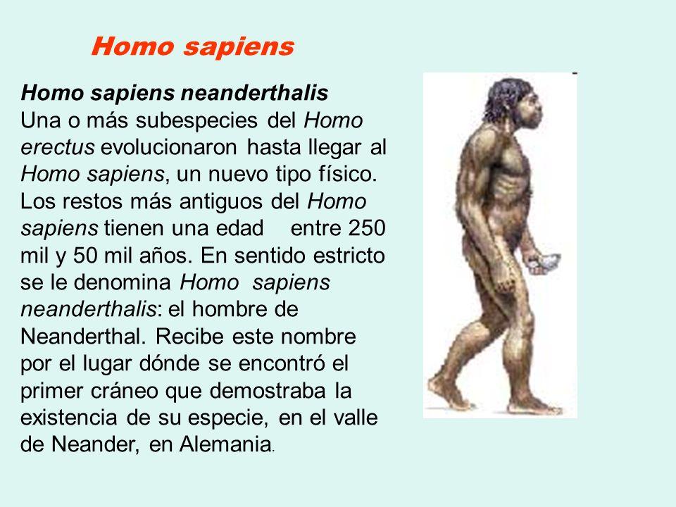 Homo sapiens Homo sapiens neanderthalis