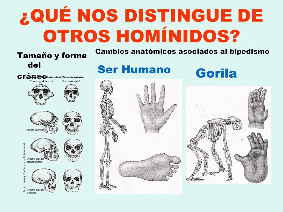 ¿QUÉ NOS DISTINGUE DE OTROS HOMÍNIDOS