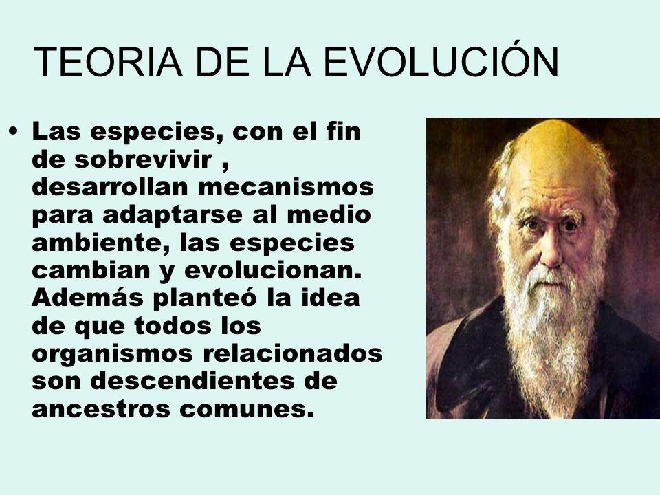 TEORIA DE LA EVOLUCIÓN