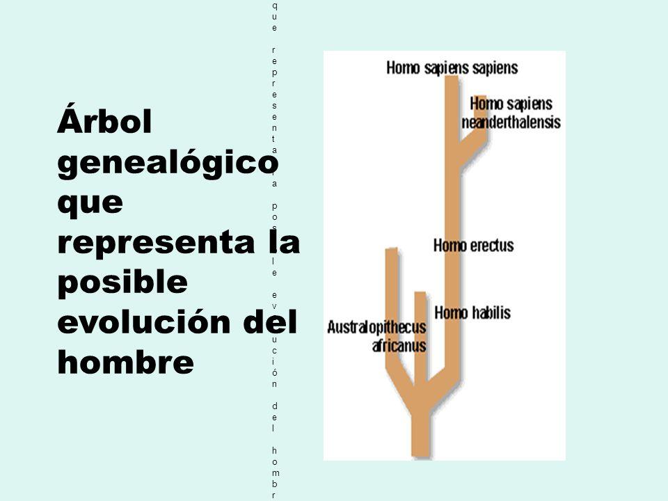 Árbol genealógico que representa la posible evolución del hombre