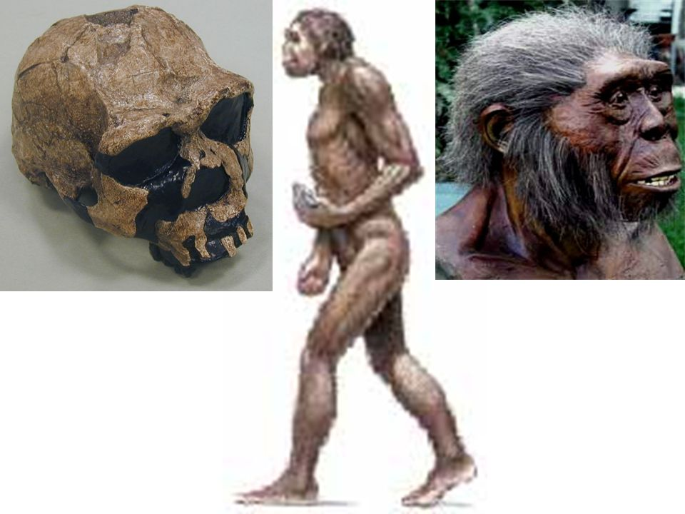 Entre los restos arqueológicos encontrados en 1940 en Spirit Cave, Nevada, Estados Unidos, estaba un cuerpo humano envuelto en dos mantas de fibra. La cabeza y parte del hombro derecho estaban momificados, con la piel intacta. El resto del esqueleto es hueso desnudo. En 1940 se propuso que tenía 1,500 a 2,000 años de antigüedad.