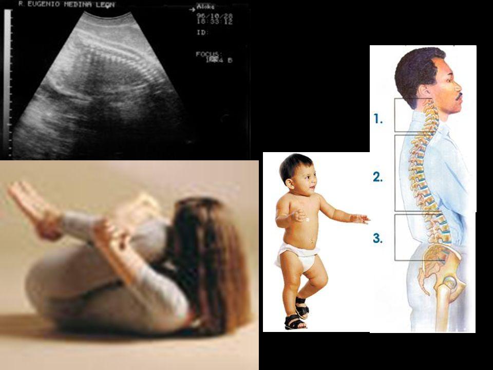 Otro cambio significativo que repercute en la columna es el paso que representa en la posición fetal donde se encuentra una única cifosis, al momento del nacimiento y más aún, cuando empieza el niño a caminar donde se transforma en las diferentes curvaturas conocidas (lordosis cervical, difosis toracia, lordosis lumbar, cifosis sacra