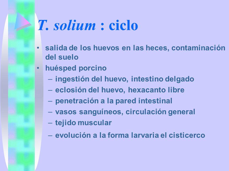 T. solium : ciclo salida de los huevos en las heces, contaminación del suelo. huésped porcino. ingestión del huevo, intestino delgado.