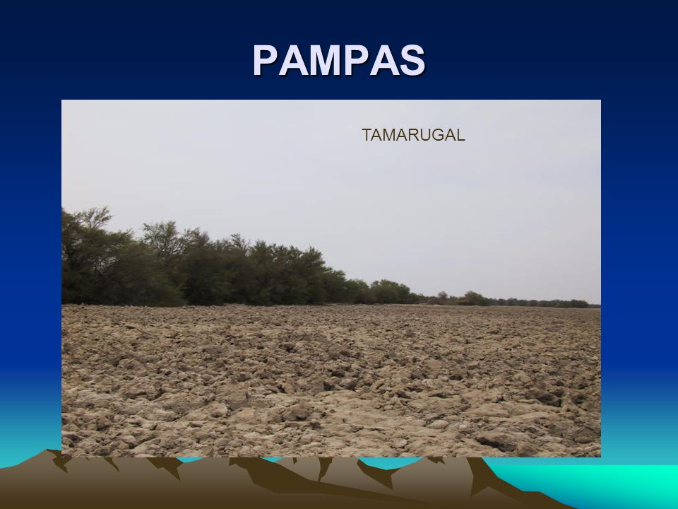 PAMPAS TAMARUGAL